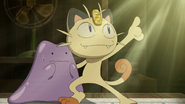Meowth with Ditto