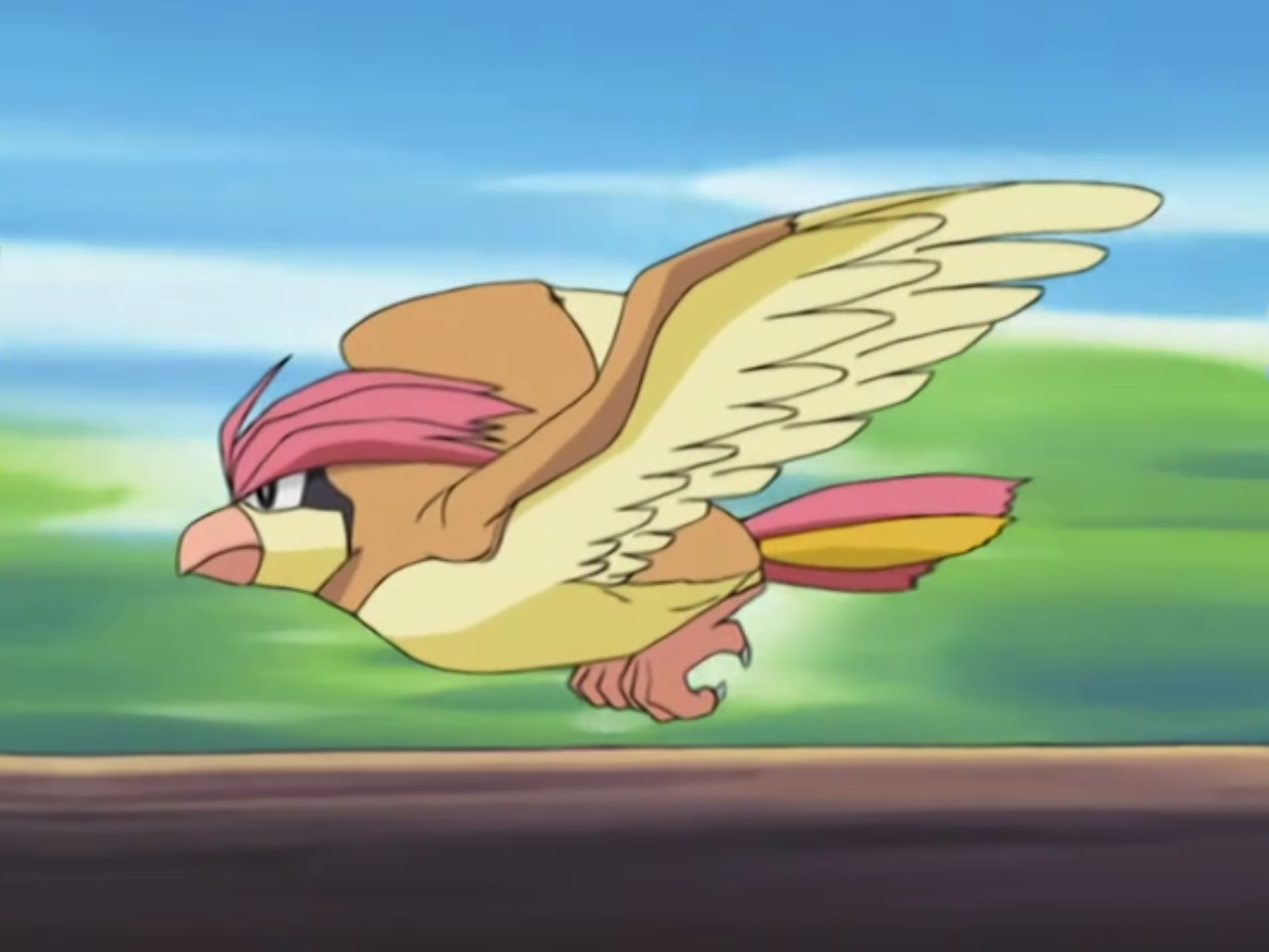Vladimir's Pidgeotto was used in his example to show Ash and his Swellow how to use Aerial Ace correctly.