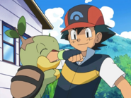Turtwig giving affection to Ash