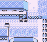 Cerulean City - Gym