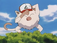 Mankey with hat