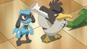 Ash and Riolu Farfetch'd
