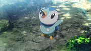 Verity Piplup