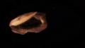 게노세크트 화석