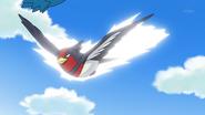Ash's Swellow Quick Attack
