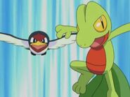 EP288 Taillow y Treecko