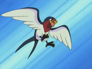 Ash Taillow-0