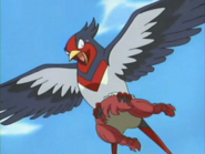 Swellow in shock
