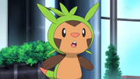 As Chespin