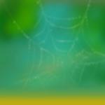 Type Background Bug