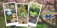 New Pokemon Snap Celebration