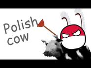 Polish cow but with a Pole