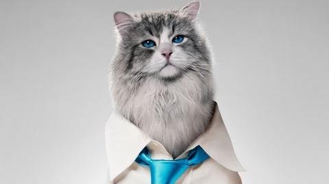 Jak zostać kotem (zwiastun nr 1)
