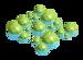 Algae.webp