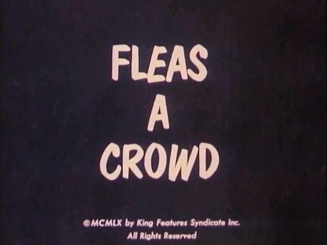 Fleas a Crowd
