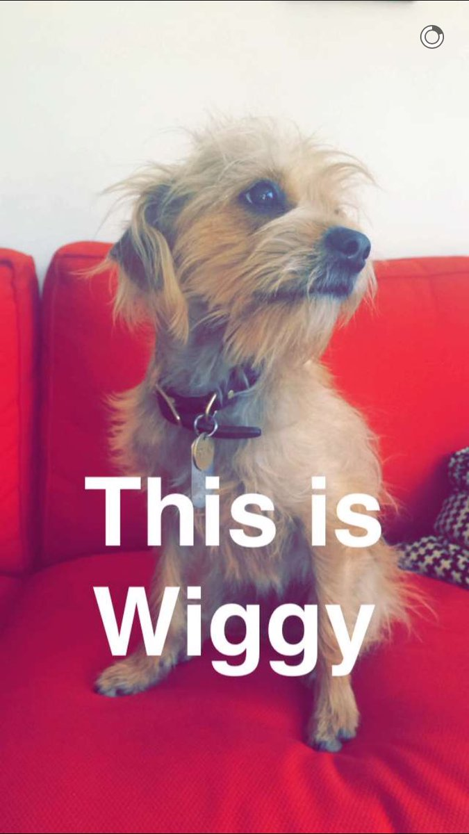 Wiggy/Gallery