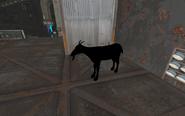Sp a2 underbounce goat