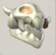 Skeleton hound cub skull.png
