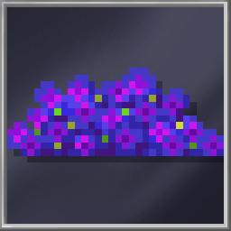 Montipora Coral