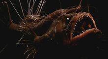 220px-Hairy Angler.jpg