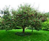Apple 325 app1.jpg