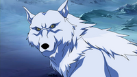 Wolf Young Justice