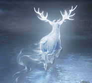 Harry Potter's Patronus