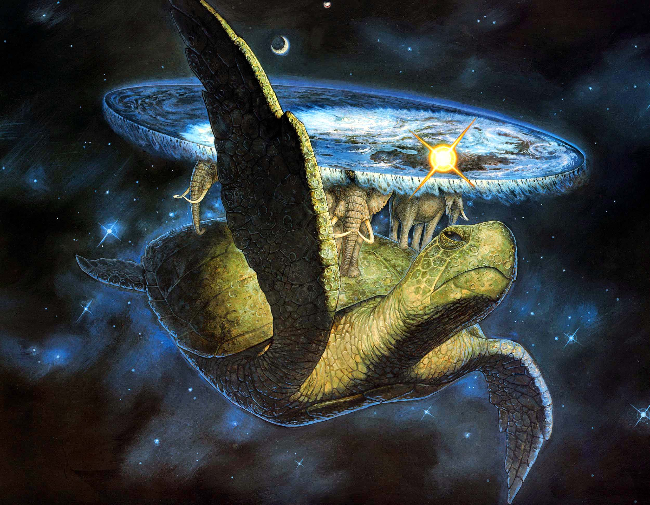Turtle Physiology