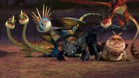Main 5 Dragons