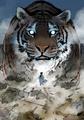 Gang Ryong (Gosu) Tiger