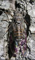Scpbug (1)