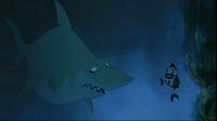 Joe and Shark