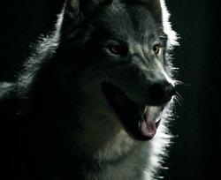 Werewolf VD.png