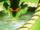 Dragon Summoning
