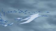 Ice Release Swallow Snow Storm