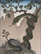 Uwabami-myth