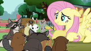 Image - Fluttershy with her pet animals S3E5