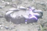 KSZe-Sundial Tojiru Gear