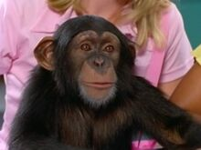 Kelly-The-Chimp-300x225.jpg
