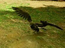 Sensei in Bird Form.jpg