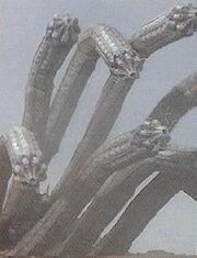 PRMF-Hydra Worm.jpg
