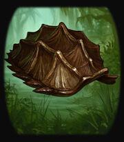 Turtle Shell.jpg