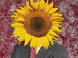 Sunflower Official