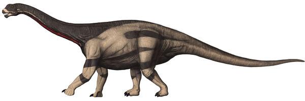 Camarasaurus 1.jpg
