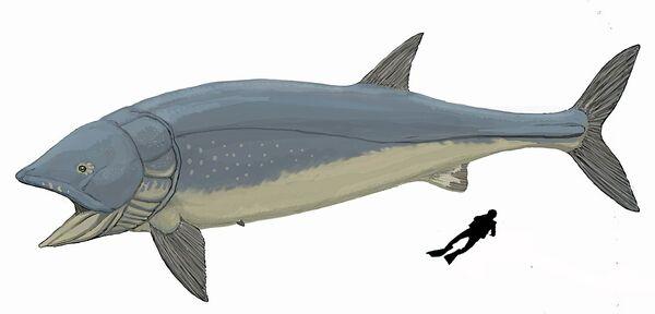 1200px-Leedsichthys problematicus.jpg