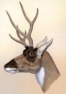 Ramoceros osborni the deer mimic pronghorn by willemsvdmerwe-d9egxvv