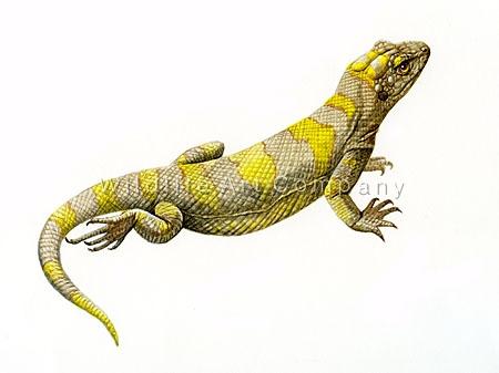 Ardeosaurus