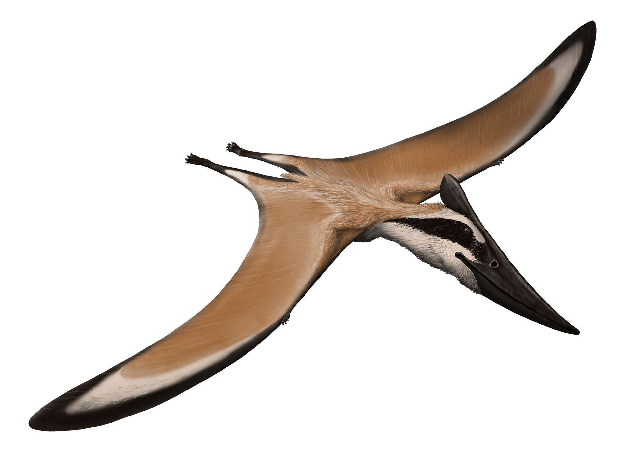 Alamodactylus