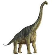Brachiosaurus666