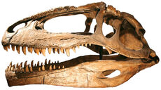 Giganotosauruscraneo.jpg